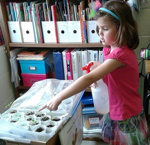 student watering baby seedings inside